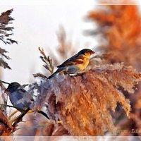 Птичья жизнь зимой :: Лидия (naum.lidiya)