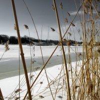 На реке :: AleksSPb