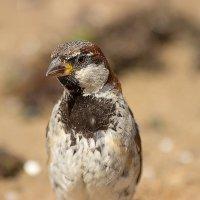 Почти орел :: Денис Быстров