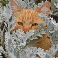 Глазки рыжего кота :: Olcen Len