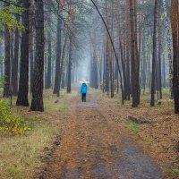 Дождь в бору :: Сергей Царёв