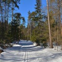 Прогулка по весеннему лесу :: Алексей (GraAl)