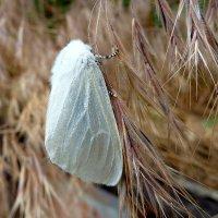 Модница в белоснежном манто!... :: Лидия Бараблина