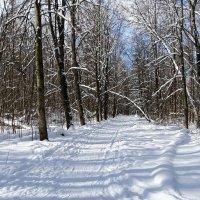 В конце зимы в городском парке :: Милешкин Владимир Алексеевич