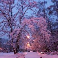 Ранний вечер после снегопада :: Ирина Via