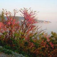 В Кабардинке весна :: Переменка Переменка