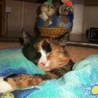 Кот спит :: Елена