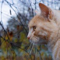 Любимый котятко )) :: Алексей le6681 Соколов