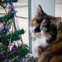 Новогодняя кошка :: Вера Аксёнова