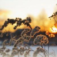С зимним солнцем :: Алексей (GraAl)