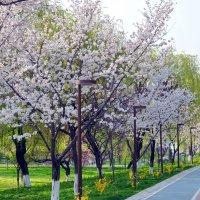 Весна :: Mir-Tash
