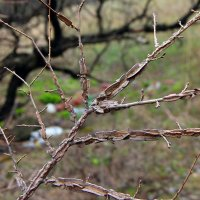 Чудо дерево. :: Владимир Усачёв