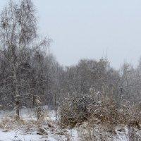 Первый снежок :: Жанна