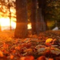 Пламенеющие листья :: Алексей Баринов