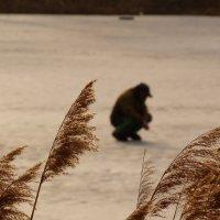 фанат зимней рыбалки :: Александр Прокудин