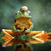 frog :: ian 35AWARDS
