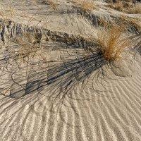 На песке II :: Владимир Самсонов