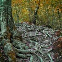 В осеннем Кавказском лесу. :: Олег Рыбалко