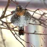 Зиму пережил-- осталось весну перезимовать :: Barguzin_45 Иваныч