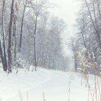 Запомни зиму такой. :: андрей