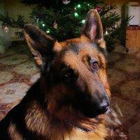 Мой любимый пёс :: Маргарита