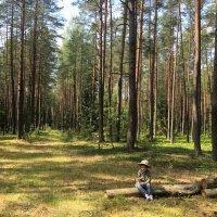 Привал в лесу :: Сергей Беличев