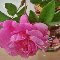 Роза в стакане :: Нина Корешкова