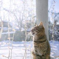 Весенние песни в морозное утро :: Ирина Полунина
