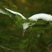 Белая птица :: Валерий Талашов