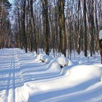 Солнечная,снежная зима к апрелю :: Лидия (naum.lidiya)