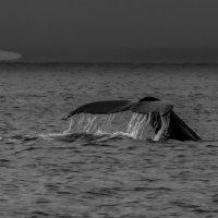 морской кит :: Георгий А