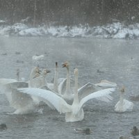 Алтай оз.Светлое  (Лебединое) :: Эльвира Куртыгина