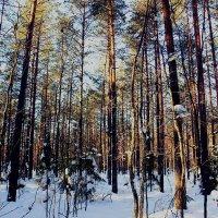 Зимой в лесу :: Сергей Кочнев