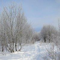 Зимняя природа. :: Валентина Жукова