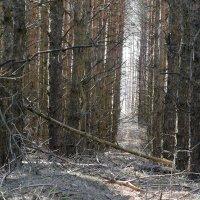 Сказочный лес :: Valera Solo