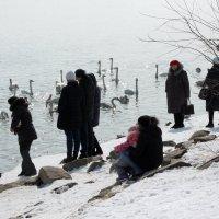 Пришли посмотреть на лебедей :: Олег Афанасьевич Сергеев