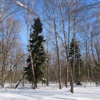 Снежный март :: Валюша Черкасова