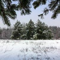 Мартовские проводы зимы 2018. :: Владимир M
