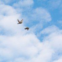 Голуби в облаках :: Татьяна Золотых