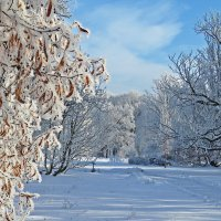 Зимний день в парке замка Эмниште :: ИРЭН@ .