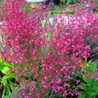 Цветы июля :: Марина Таврова