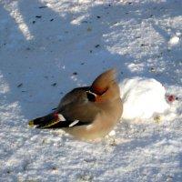 Сердитый птах :: Надежда