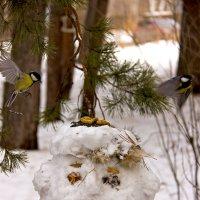 Снеговик :: Селянка Наталья