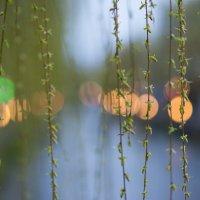 Весна в Киото. Япония :: Алексей Саломатов