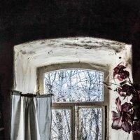 Окно из прошлого :: ирина лузгина