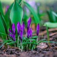 приближение весны :: Ольга (Кошкотень) Медведева