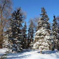 Мороз и солнце - день чудесный! :: Лидия Бараблина