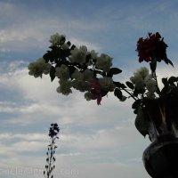 Цветы в вазе :: Elena Gosteva