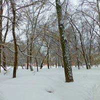 Снег, везде снег :: Raduzka (Надежда Веркина)