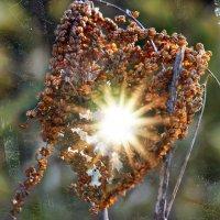 Когда проглядывает солнце :: Татьяна Кадочникова